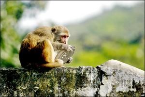 monkey-plate-gallery-083007